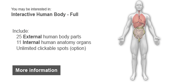 Interactive Human Body Organs Diagram by Art101 | CodeCanyon