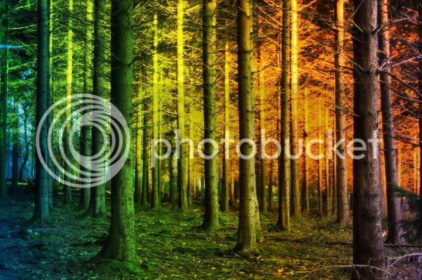 photo enchanted-forest_zpschm2paqu.jpg