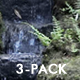 Common Raccoon - HD - Pack 3 - 218