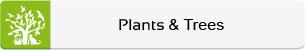 Animals-Nature-Plants-Trees