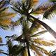 Sunbeams In The Palm Tree