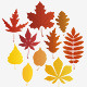 Autumn leaves (vector)