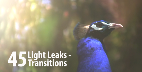 Transitions Of Light 2 (12-Pack) - 2