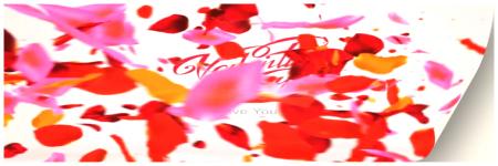 Colors Petals Logo preview