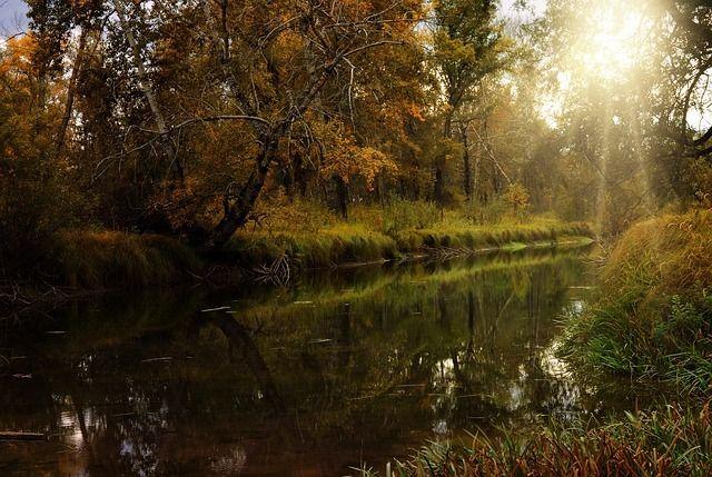 photo forest-945039_640_zpsf8rqz1h3.jpg