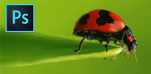 Lady Bug Digital Painting