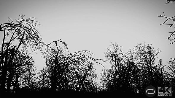 Camera Moves Under Dead Trees - 1