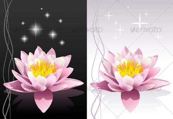 pink sacred indian lotus background
