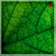 Green Leaf Background - 2