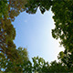 Sky and Clouds in the Forest Canopy