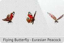 photo 11_Flying Butterfly - Eurasian Peacock_zpsf1hqgkv1.jpg