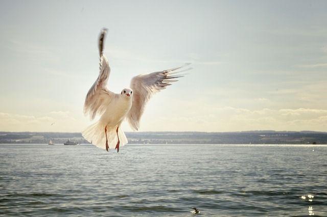 photo gull-192909_640_zpsgwcujtjr.jpg