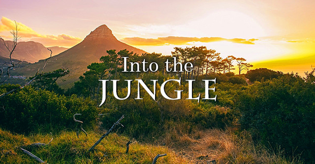 Into-The-Jungle