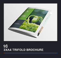 Trifold Brochure - 58