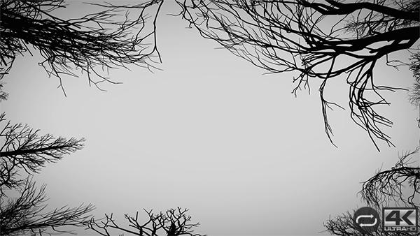 Camera Moves Under Dead Trees - 2