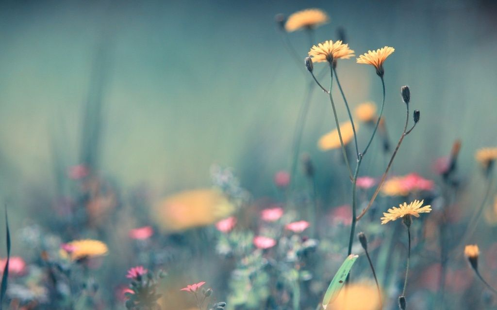 photo field-of-flowers-tumblr-wallpaper-5_zpssgwnmiq3.jpg