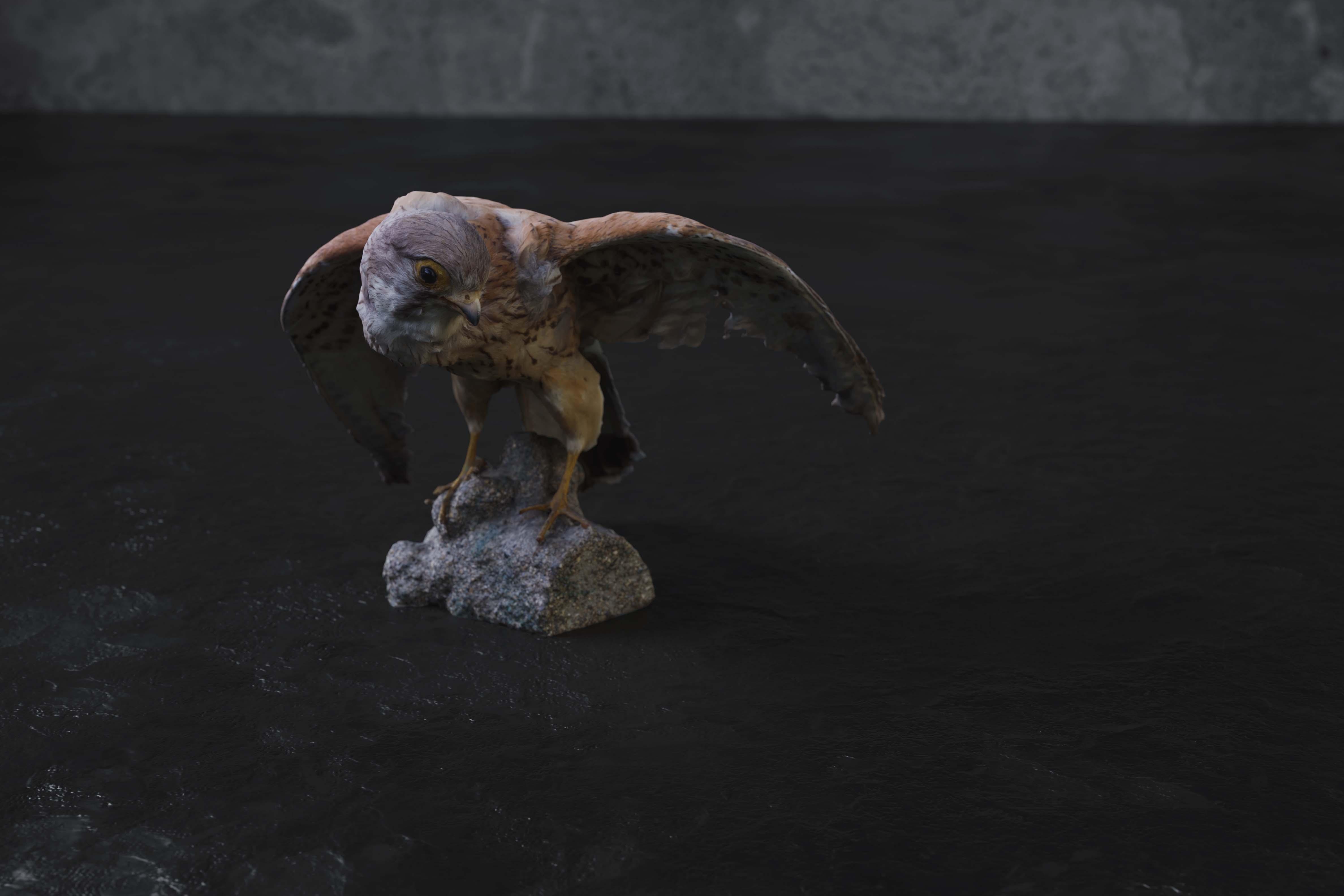 Realistic Kestrel Bird - 1