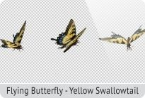 photo 13_Flying Butterfly - Yellow Swallowtail_zpsde7mrvzm.jpg