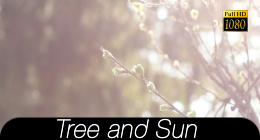 Bokeh Tree Background 5 - 70
