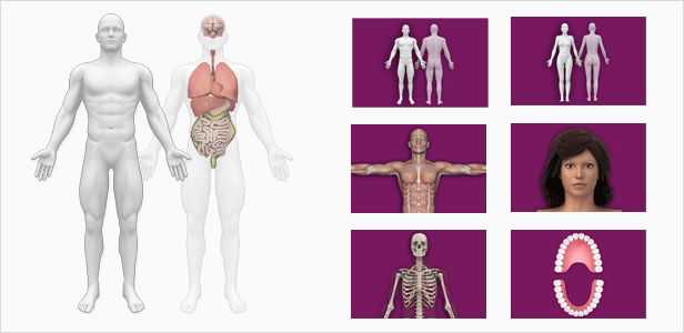 Interactive Human Anatomy Templates