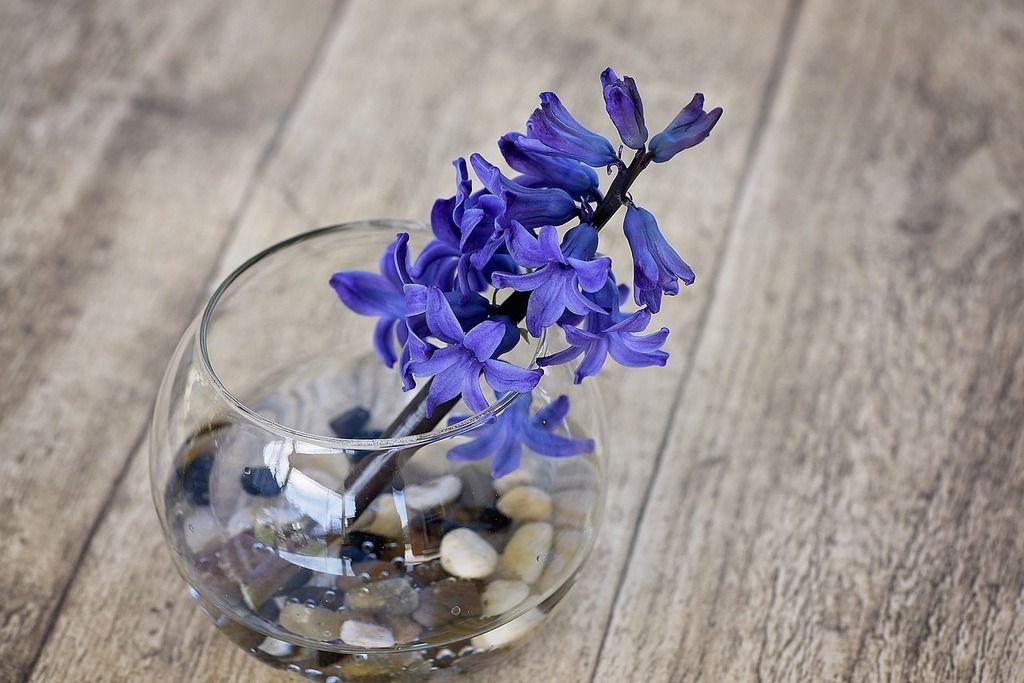 photo hyacinth-775224_1280_zpsmjhglbej.jpg