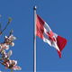 Canada Flag On Water - 78