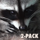 Common Raccoon - HD - Pack 3 - 41