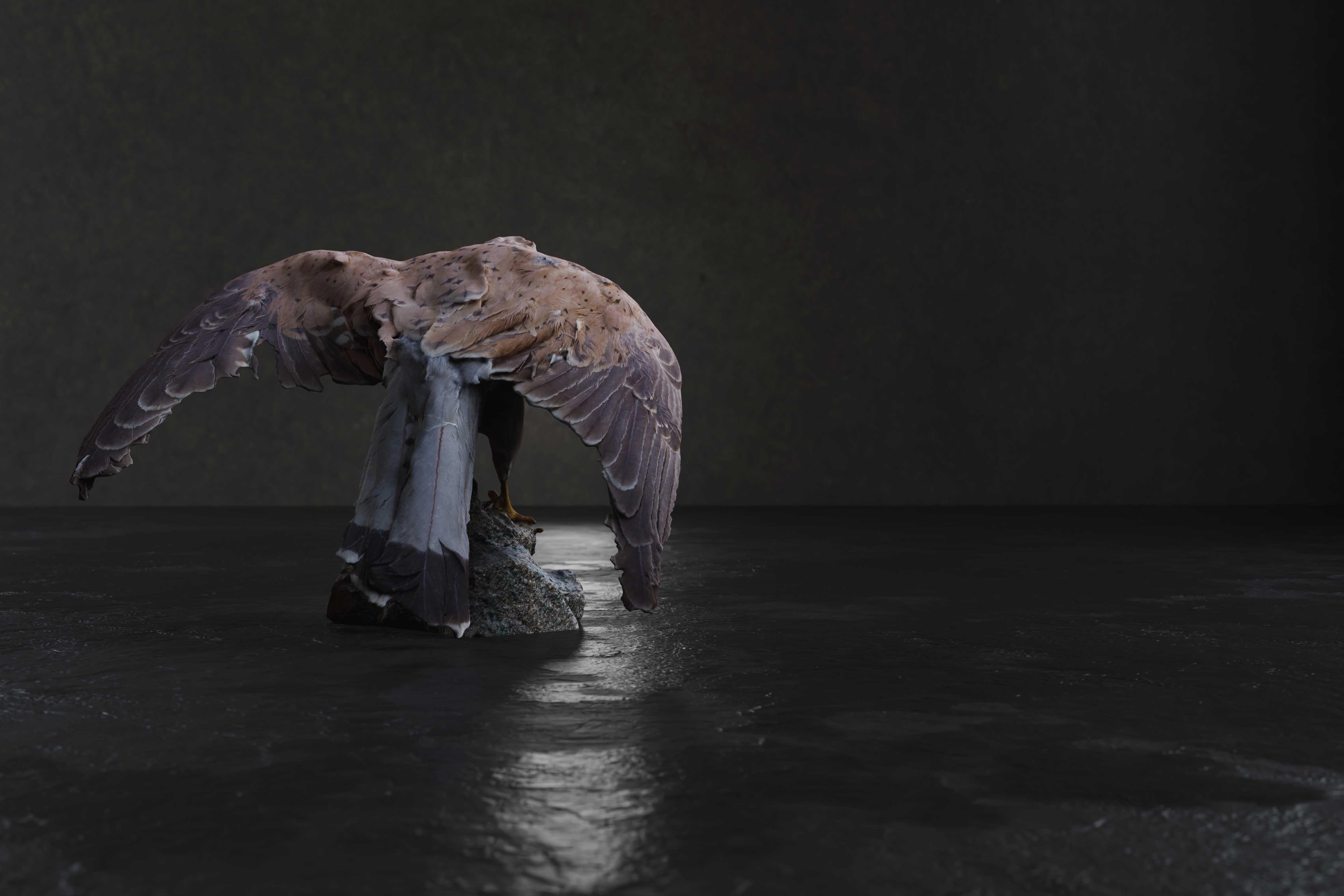 Realistic Kestrel Bird - 2