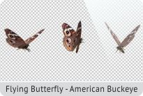 photo 10_Flying Butterfly - American Buckeye_zpsyr4937eu.jpg
