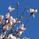 Cherry Blossoms - HD Pack 4 - 186