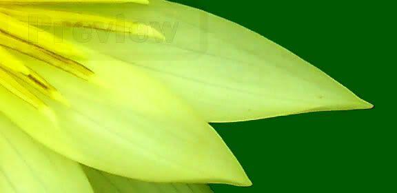 Lotus preview