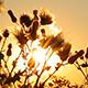 Sunbeams Nature