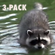 Common Raccoon - HD - Pack 3 - 39