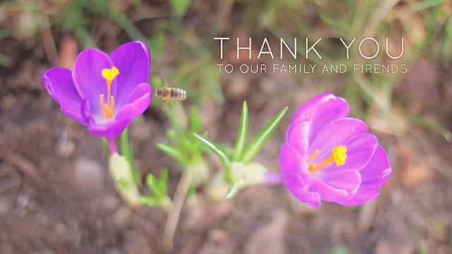 photo-gallery-sun-flowers