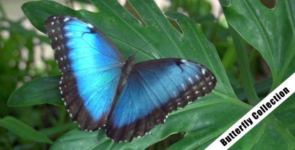 Butterfly 07 - 1