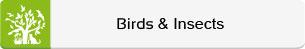 Animals-Nature-Birds-Inscets